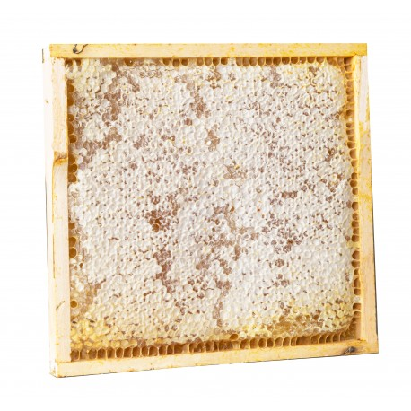 2 honeycombs (ca. 1 kg each honeycomb) - square